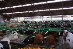 boxy-cow-welfare-green-stall-easy-v-provozu-1