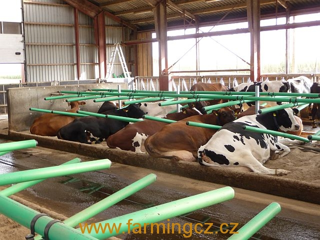 boxy-cow-welfare-green-stall-easy-v-provozu-11
