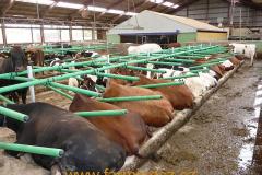 boxy-cow-welfare-green-stall-easy-v-provozu-13