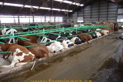 boxy-cow-welfare-green-stall-easy-v-provozu-15