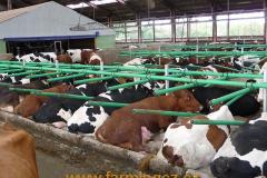 boxy-cow-welfare-green-stall-easy-v-provozu-16