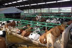 boxy-cow-welfare-green-stall-easy-v-provozu-3