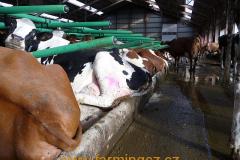 boxy-cow-welfare-green-stall-easy-v-provozu-4