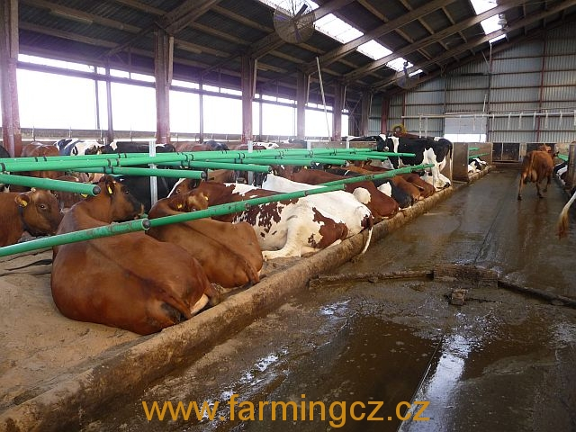 boxy-cow-welfare-green-stall-easy-v-provozu-5