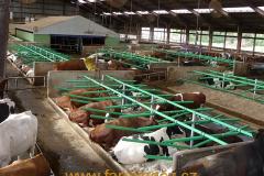 boxy-cow-welfare-green-stall-easy-v-provozu-7
