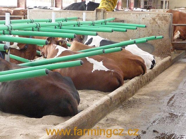 boxy-cow-welfare-green-stall-easy-v-provozu-8