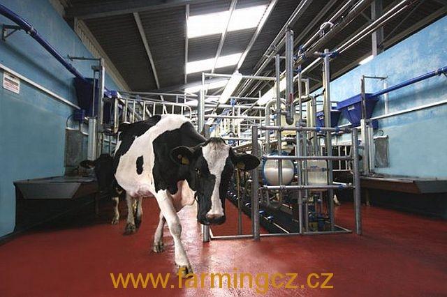 dojirna-dairymaster-swiftflo-swing-over-5