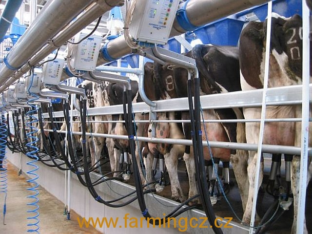 dojirna-dairymaster-swiftflo-swing-over-6