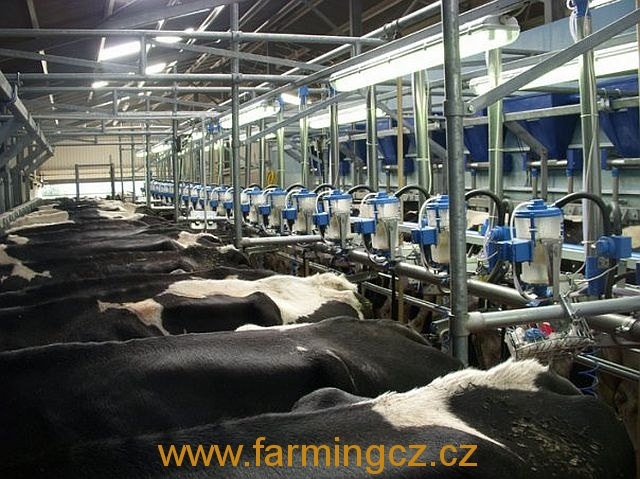 dojirna-dairymaster-swiftflo-swing-over-12